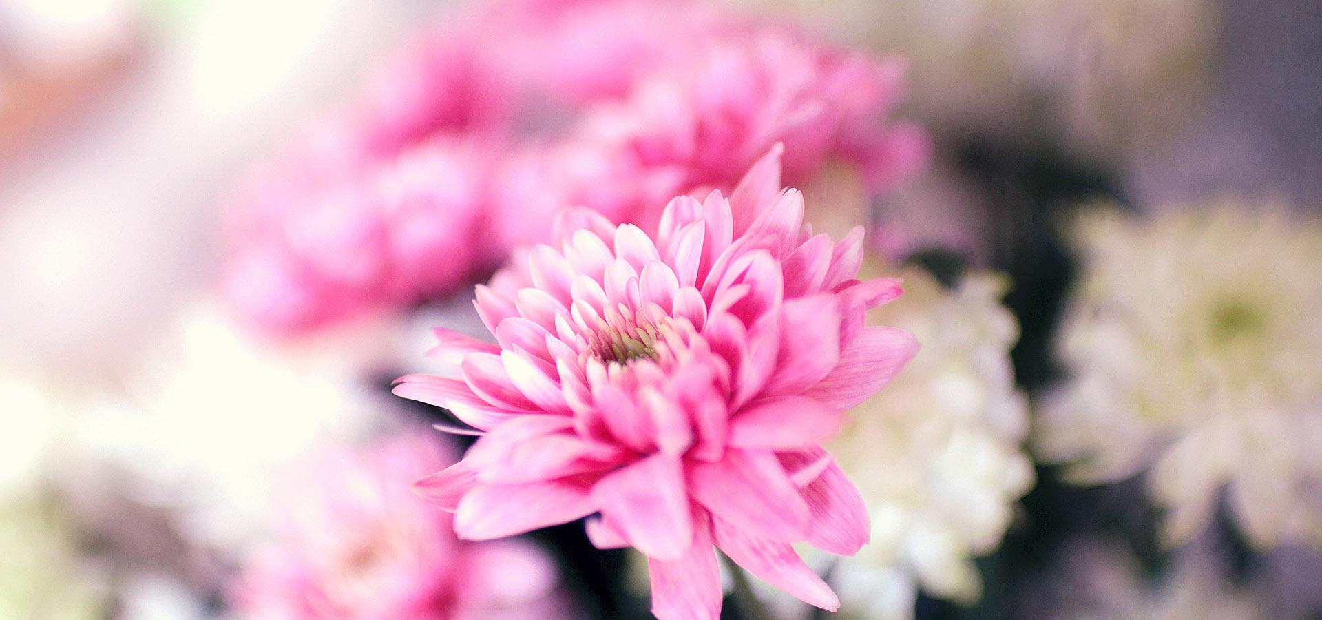 pink_flowers_slide