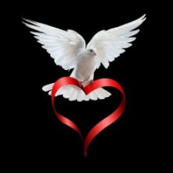 Dove-doves-32938347-1600-1200-300x225.jpg