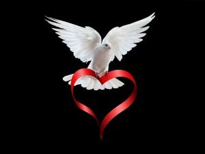 Dove-doves-32938347-1600-1200