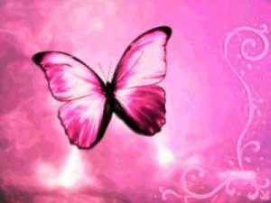 animated-pink-butterfly-picture1